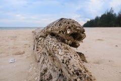 Toter Baum auf einem Strand am Sonnenschein Lizenzfreies Stockfoto