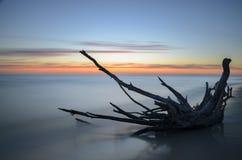 Toter Baum auf einem Strand während des Sonnenaufgangs mit undeutlichem Meer im Hintergrund Stockfotografie