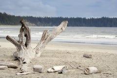 Toter Baum auf Long Beach stockbilder