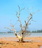 Toter Baum auf Meer Stockbild