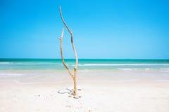 Toter Baum auf schönem Strand lizenzfreies stockfoto