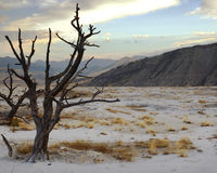 Toter Baum auf Terrasse am Sonnenaufgang Stockfoto