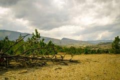 Toter Baum auf trockenem Land Stockfotografie