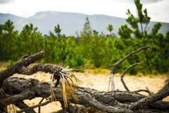 Toter Baum auf trockenem Land Stockbild
