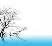 Toter Baum auf Wasser Lizenzfreies Stockbild