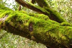 Toter Baum bedeckt im grünen Moos Lizenzfreie Stockfotografie