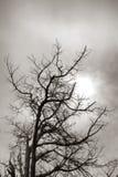 Toter Baum-bloßes Niederlassungs-Schattenbild in weichem Sun Stockfotos