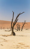 Toter Baum in Deadvlei, Namibia Lizenzfreies Stockbild
