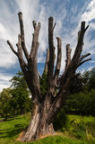 Toter Baum in den üppigen Umlagerungen lizenzfreies stockbild