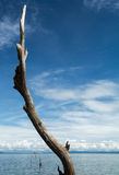 Toter Baum, der aus dem Wasser heraus am See Kariba haftet Stockbild