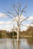 Toter Baum in der Flut Stockbild