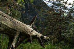 Toter Baum, der im Gras liegt und durch die Sonne belichtet wird stockbilder