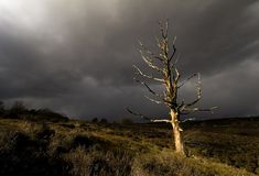 Toter Baum in der Sonneleuchte Lizenzfreies Stockfoto