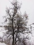 Toter Baum in der Winterzeit lizenzfreies stockbild