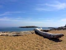 Toter Baum des Paronamic-Ansicht-Ozeans Lizenzfreie Stockfotografie