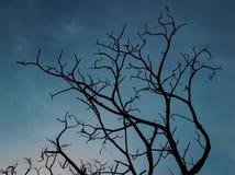 Toter Baum des Schattenbildes auf Hintergrund des bewölkten Himmels Lizenzfreie Stockbilder