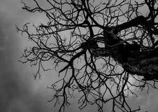 Toter Baum des Schattenbildes auf Hintergrund des bewölkten Himmels Stockfoto