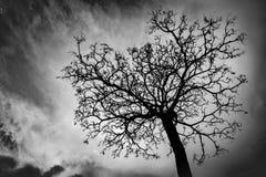 Toter Baum des Schattenbildes auf Hintergrund des bewölkten Himmels Stockbild