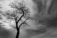 Toter Baum des Schattenbildes auf Hintergrund des bewölkten Himmels Stockfotografie