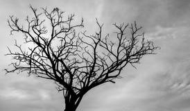 Toter Baum des Schattenbildes auf weißem Hintergrund Lizenzfreie Stockbilder