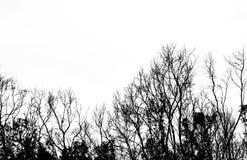 Toter Baum des Schattenbildes lokalisiert auf weißem Hintergrund Stockfotografie