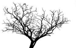 Toter Baum des Schattenbildes lokalisiert auf weißem Hintergrund Stockbild