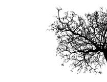 Toter Baum des Schattenbildes lokalisiert auf weißem Hintergrund Stockfotos