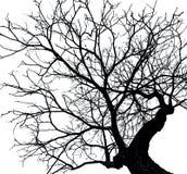 Toter Baum des Schattenbildes lokalisiert auf weißem Hintergrund Lizenzfreie Stockfotos