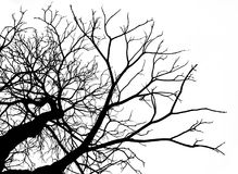 Toter Baum des Schattenbildes lokalisiert auf weißem Hintergrund Lizenzfreies Stockfoto