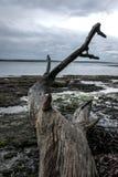 Toter Baum durch den Strand lizenzfreie stockfotos