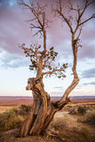 Toter Baum durch Wüste Stockbilder