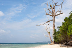 Toter Baum in einem Wald auf einem Strand bei Havelock Stockfotografie