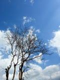 Toter Baum gegen den bewölkten Himmel Stockbilder