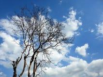 Toter Baum gegen den bewölkten Himmel Stockbild