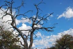 Toter Baum gegen den Himmel Stockfoto