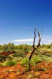 Toter Baum im australischen Hinterland Stockbild