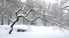 Toter Baum im Central Park New York stockfotos