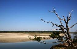 Toter Baum im Gezeiten- Sumpf Lizenzfreies Stockfoto
