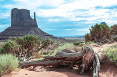 Toter Baum im Monument-Tal, Arizona, Utah Stockbilder
