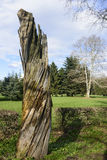 Toter Baum im Monza-Park Lizenzfreie Stockbilder