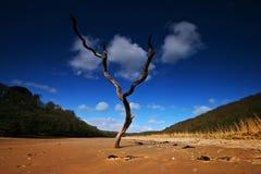 Toter Baum im Sand auf der Querneigung Stockbild