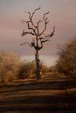 Toter Baum im Schotterweg Lizenzfreies Stockfoto