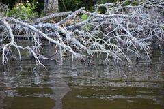 Toter Baum im Wasser Stockfotografie