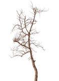 Toter Baum lokalisiert Stockbilder