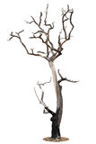 Toter Baum lokalisiert auf Weiß Stockbild