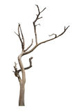 Toter Baum lokalisiert auf Weiß Lizenzfreie Stockfotos