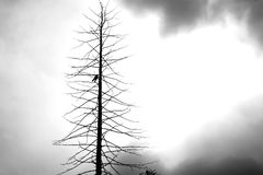 Toter Baum mit einer Krähe Stockbild