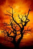 Toter Baum mit Himmel Stockfotografie