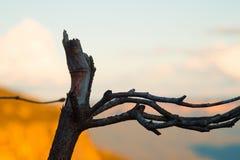 Toter Baum mit Niederlassungen gegen Himmel und Berge Stockfoto