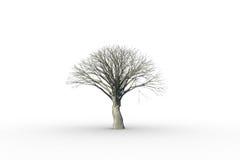Toter Baum ohne Blätter Stockbild